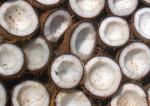 Bildo de kokoso